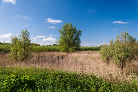 View at a part of the Dutch National Park De Biesbosch, North-Brabant. Stock Photo - 13634192