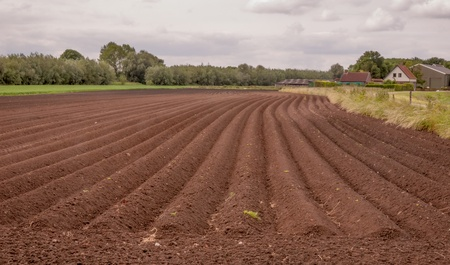 Rows of soil after planting potatoes in the Netherlands Stock Photo - 13950437