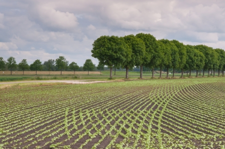Dutch landscape with trees and curved rows of young seedlings Stock Photo - 13963679