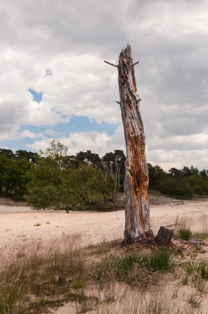 warm climate: A bare and dead tree in a dry and warm climate.