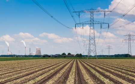 Rows of drying onions in a field with power pylons and high voltage lines, photo