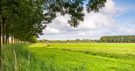 A row of trees in a green and sunny rural landscape in the Netherlands. Stock Photo - 14491748