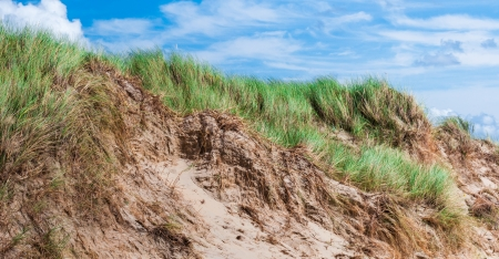 Closeup of the top of a dune near the Dutch North Sea  photo