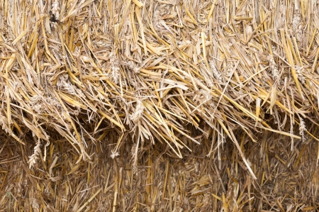 bail: Detailed view on straw in packages ready for transport