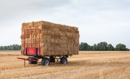 Agricultural wagon with stacked straw bales in the field waiting for transport. Stock Photo