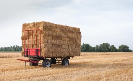 Carro agricolo con balle di paglia accatastate in campo in attesa di trasporto Archivio Fotografico - 15191659