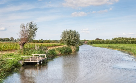pollard: Wooden fishing dock on a small river with pollard willows and reeds in a colorful Dutch landscape