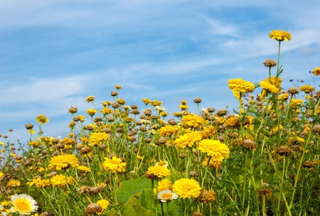 Flowering and faded weeds at a field edge against a blue sky. Stock Photo - 15020490