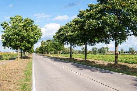 Long and sunny road with a row of trees in a rural dutch landscape in summertime. Stock Photo - 15260994