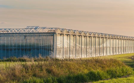 Outside of a  large greenhouse reflecting in late evening sunlight Stock Photo - 15352502