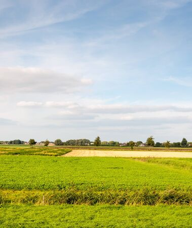Colorful rural landscape in the Netherlands. It is summer now. Stock Photo - 15425127