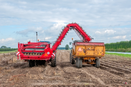 Harvesting potatoes in autumn at a Dutch potato field.