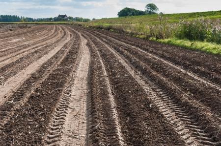 transporte terrestre: Tractor pistas en un campo de patatas después de la cosecha