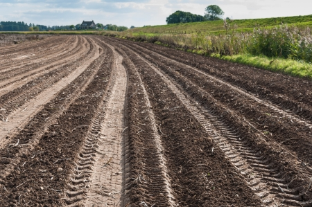 Tractor tracks in a potato field after harvesting  photo