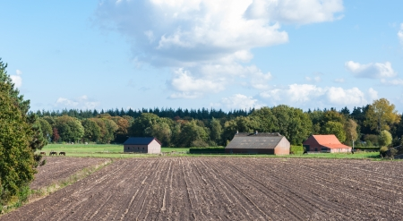 Dutch stubble field of harvested maize with straight rows and a farm in autumn photo