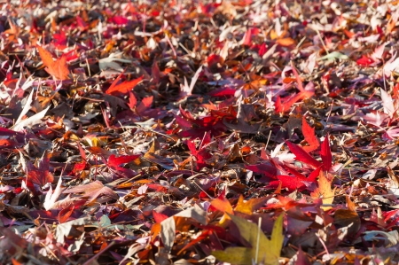 Collection of fallen leaves in various autumn colors. photo