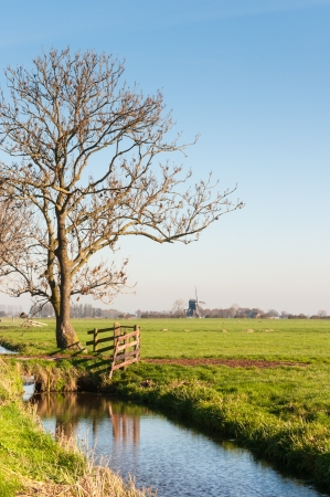 Autumnal polder landscape in the Netherlands with a windmill in the background of the landscape. photo