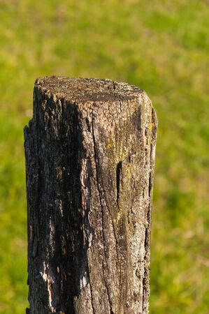 Detailed image of a weathered wooden post of a fence against a blurred natural background. photo