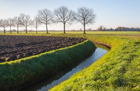 Typische Landschaft in den Niederlanden mit einer Reihe von kahlen Bäumen und einem gekrümmten Graben