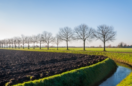 A plowed field, a ditch and a row of bare trees in a typical Dutch autumn landscape  photo