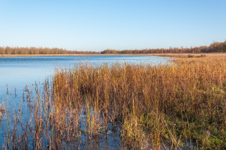 detailed view: Nature reserve with a natural pond and in the foreground a detailed view at grasses and rushes. Stock Photo