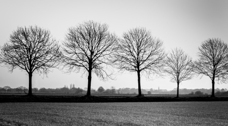 Five bare trees in a row at the edge of a small Dutch village.
