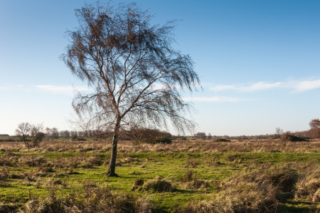 Solitary tree in a colorful Dutch nature reserve in the fall season.