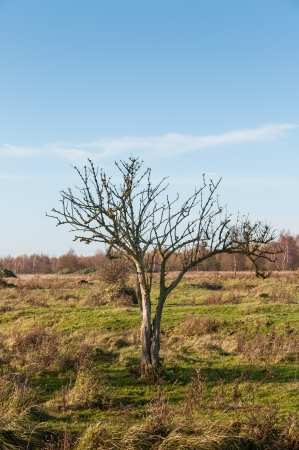 Dutch nature reserve with a solitary tree in  the autumn season. Stock Photo
