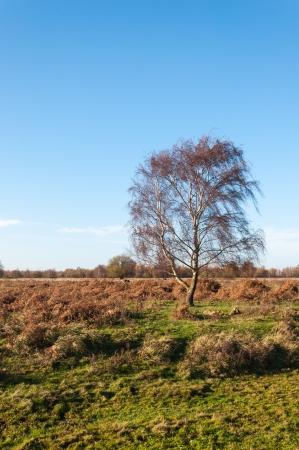 Colorful Dutch nature reserve in  the autumn season.