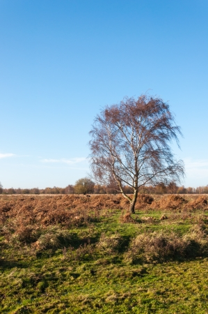 Colorful Dutch nature reserve in  the autumn season. photo