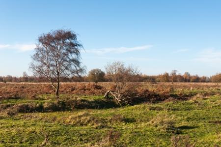 Colorful landscape in the fall season in a Dutch nature reserve.