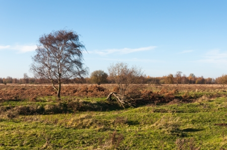 solitair: Colorful landscape in the fall season in a Dutch nature reserve.