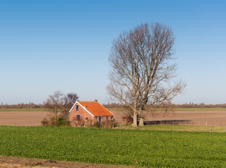 Autumnal landscape in the Netherlands with sugar beets cultivation in the foreground next to a house with blue window frames  Stock Photo - 16704807