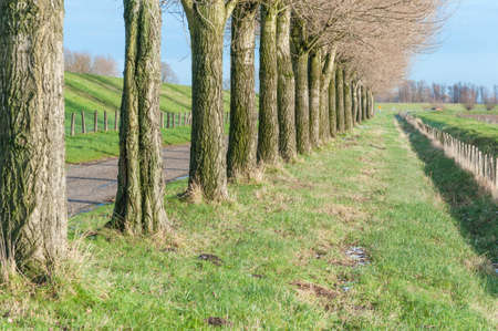 Row of bare trees in an autumnal landscape in the Netherlands. photo
