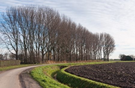 Curved road and furrows of the plowed field next to a row of tall trees. Stock Photo - 17010542