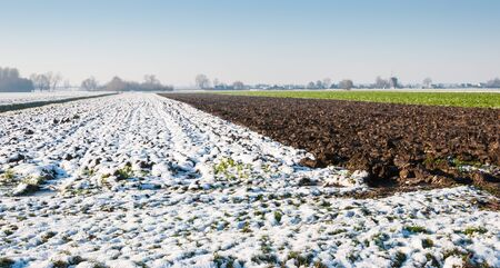 Ploughed farmland without snow and with the field crop is covered with snow in the Netherlands. photo