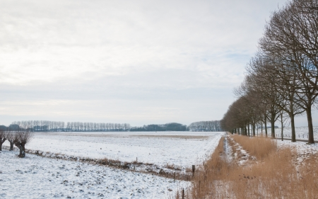 Rows of trees and a snowy Dutch landscape. photo