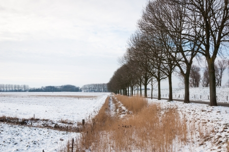 Row of bare trees besides a country road and a dike in a snowy landscape  photo