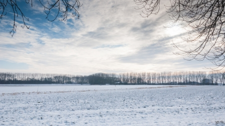 Fields in a Dutch polder covered with snow on a early morning with some fog  photo