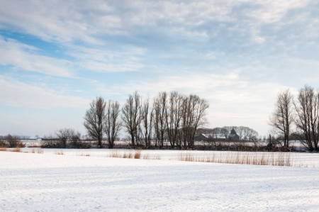 Fields covered with snow interrupted by a fringe of reeds and a row of trees in wintry Netherlands  Stock Photo - 17222747