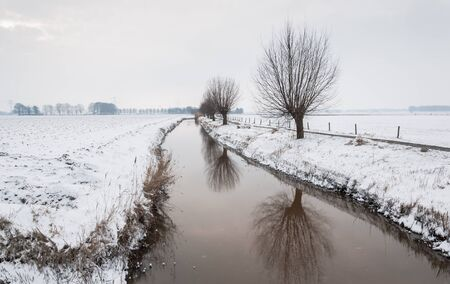Pollard willows reflected on the smooth surface of a ditch in a wintry Dutch landscape. photo