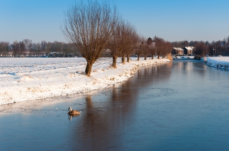 Wintry landscpae with a frozen ditch with a swimming swan at the edge of a small village. photo