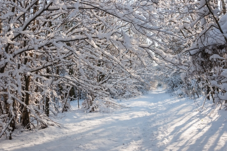 Path in wintry forest with overhanging branches covered with a thick layer of snow photo
