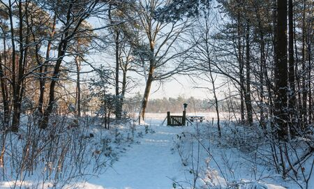 Winter forest with tall pine trees and a snowy forest trail with at the end thereof a wooden fence.