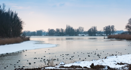 Dreamy natural area with swimming and diving moorhens in the cold water photo