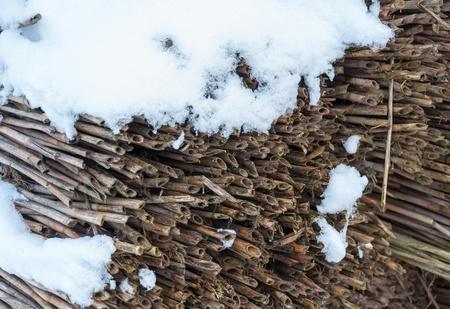 freshly fallen snow: Vista dettagliata a canne in bundle con uno strato di neve appena caduta. Archivio Fotografico