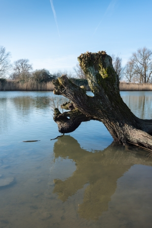 Bare and weathered tree reflected in the mirror smooth water surface. Stock Photo - 17881019