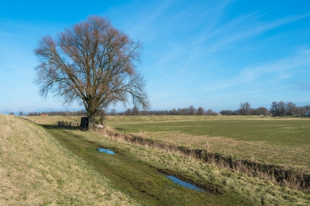 Bare tree with a small and primitive wooden hut in an agriculture landscape  photo