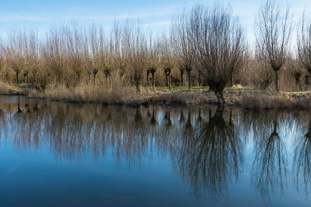 Perfect reflection of a row of pollard willows in a mirror smooth water surface. photo