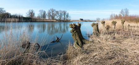 Dutch national park with pollarded willows on the bank of the creek. photo